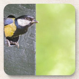 Blackbird parent in hole of nest box coaster