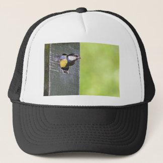 Blackbird parent in hole of nest box trucker hat