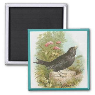 Blackbird Square Magnet
