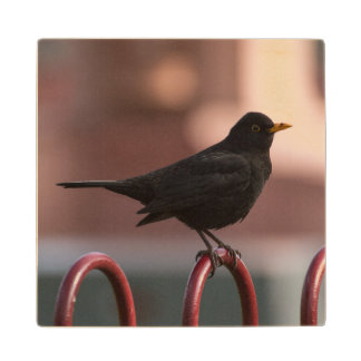 Blackbird Wood Coaster
