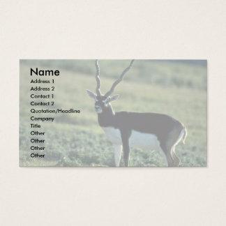 Blackbuck antelope business card