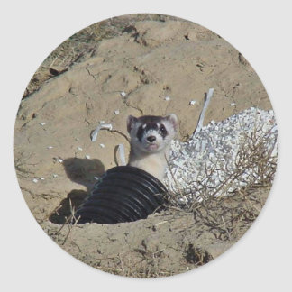 Blackfooted Ferret Classic Round Sticker