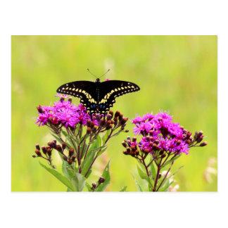 Blackswallow Tail Butterfly 2013 PC 2 Postcard