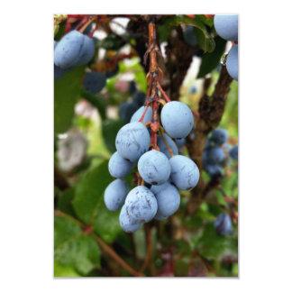 Blackthorn fruit card