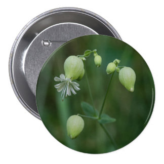 Bladder Campion Pretty White Wildflower Button