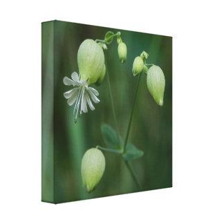 Bladder Campion White Wildflower Canvas Print