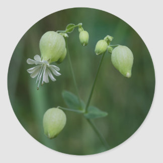 Bladder Campion White Wildflower Round Stickers