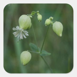 Bladder Campion White Wildflower Square Stickers
