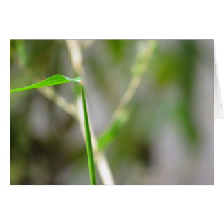 Blade of grass notecard with quote on growth