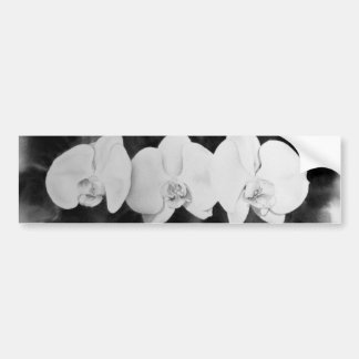 Blank and White Orchids Bumper Sticker