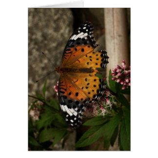 Blank-Butterfly Card