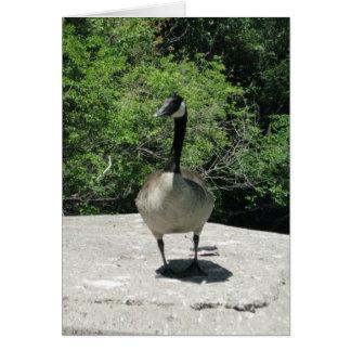 Blank_Canada Goose Card