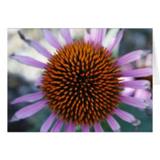 Blank Card, Echinacea Flower Card
