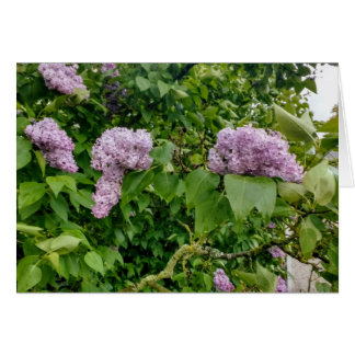 Blank card featuring image of lilacs