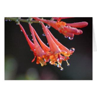 Blank Card - Morning Dew