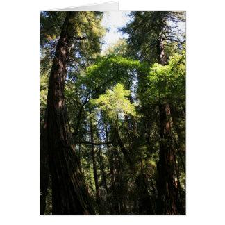 Blank Card, Muir Woods Card
