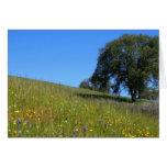 Blank Card, Oak Tree & Poppies