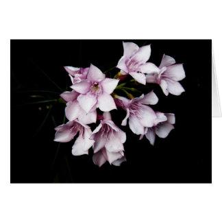 Blank Card - Pink Oleander