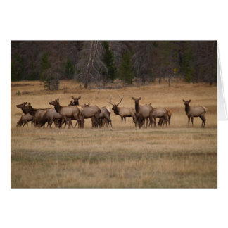 Blank Card with Elk Herd Background