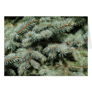 Blank Card with Evergreen Tree Background