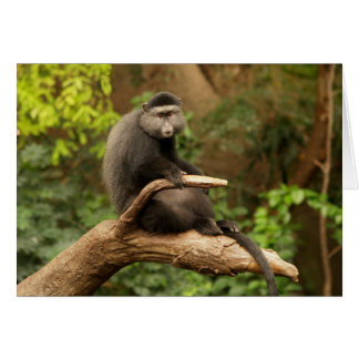 Blank Card with Monkey Background