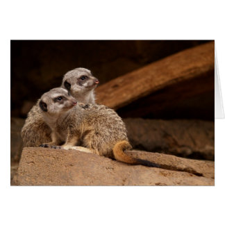 Blank Card with Two Meerkat Background