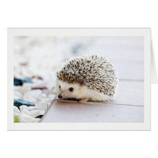 Blank Cute Hedgehog greeting card