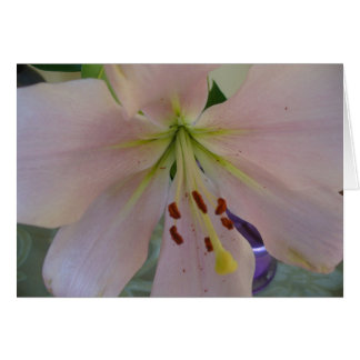 Blank Flower Notecard Note Card