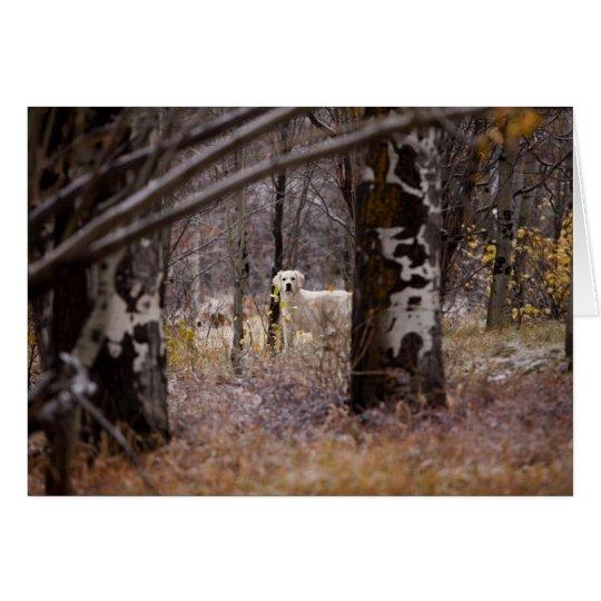 Blank Golden Retriever Photo Card