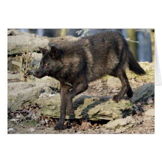 Blank Greeting Card: Black Wolf Card