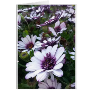 BLANK Greeting Card - Floral - Purple & White