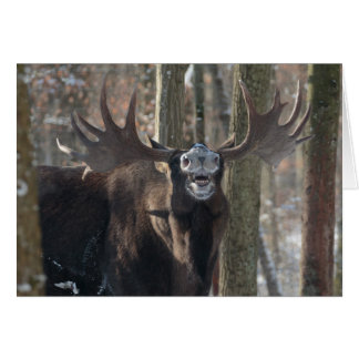 Blank Greeting Card: Laughing Moose Card