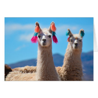 Blank Greeting Card - Llamas
