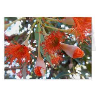 Blank Greeting Card - Orange Gum Tree Flowers