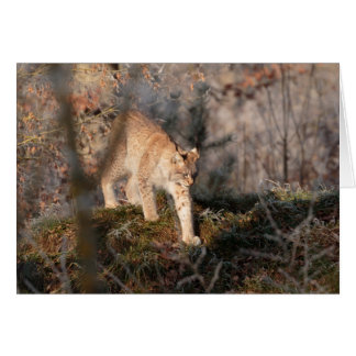 Blank Greeting Card: Prowling Lynx Card