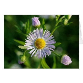 Blank Greeting Card: Stunning Flower Card