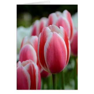 Blank Greeting Card with Pink Tulips