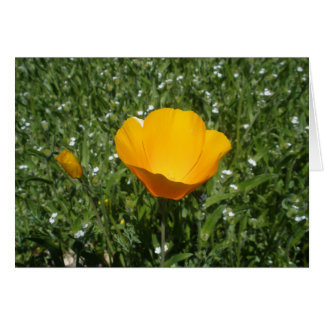 Blank Greeting Card with Yellow Wildflower