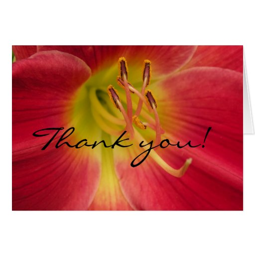 Blank Inside - Red Lily Thank You Card