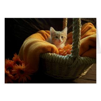 blank kitten card