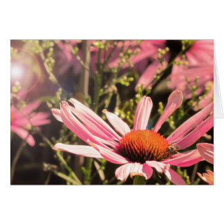 "Blank note card, ""Cone Flower Field"" Card"