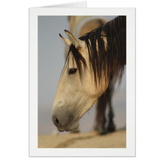 Blank Note Card with a wild horse pictured.