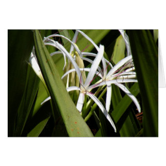 Blank Note Card with Wild Swamp Lilies