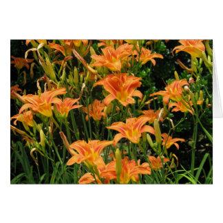Blank Orange Flowers Note Card
