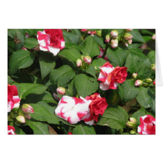 Blank Pink Flowers Greeting Card