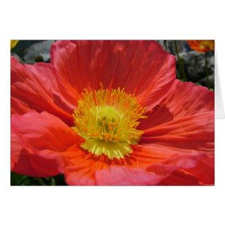 Blank Poppy Note Card 2