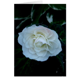 Blank-Pure White Flower Note Card