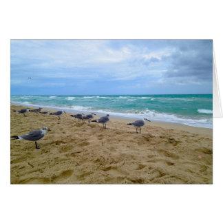 Blank Seagull Beach Card