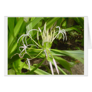 Blank Swamp Lily Card