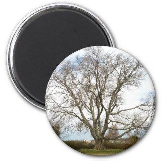 Blank - Wisdom Tree Magnet